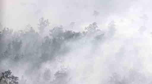 Kebakaran Hutan di Sumsel (Foto: Antara)